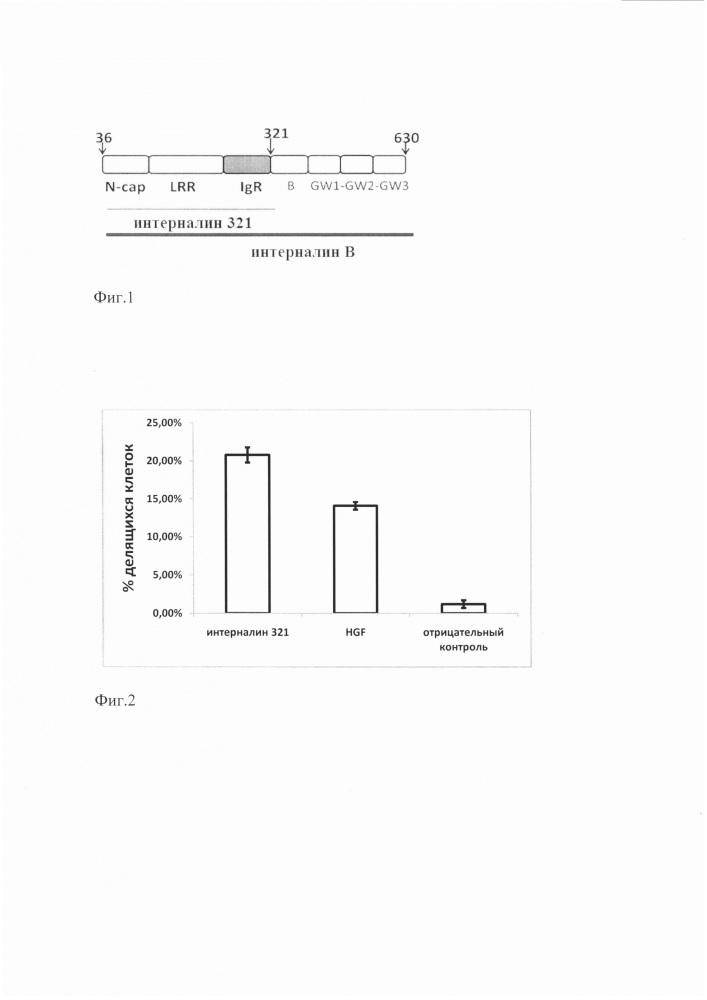 Рекомбинантный интерналин в 321, полученный с помощью штамма escherichia coli