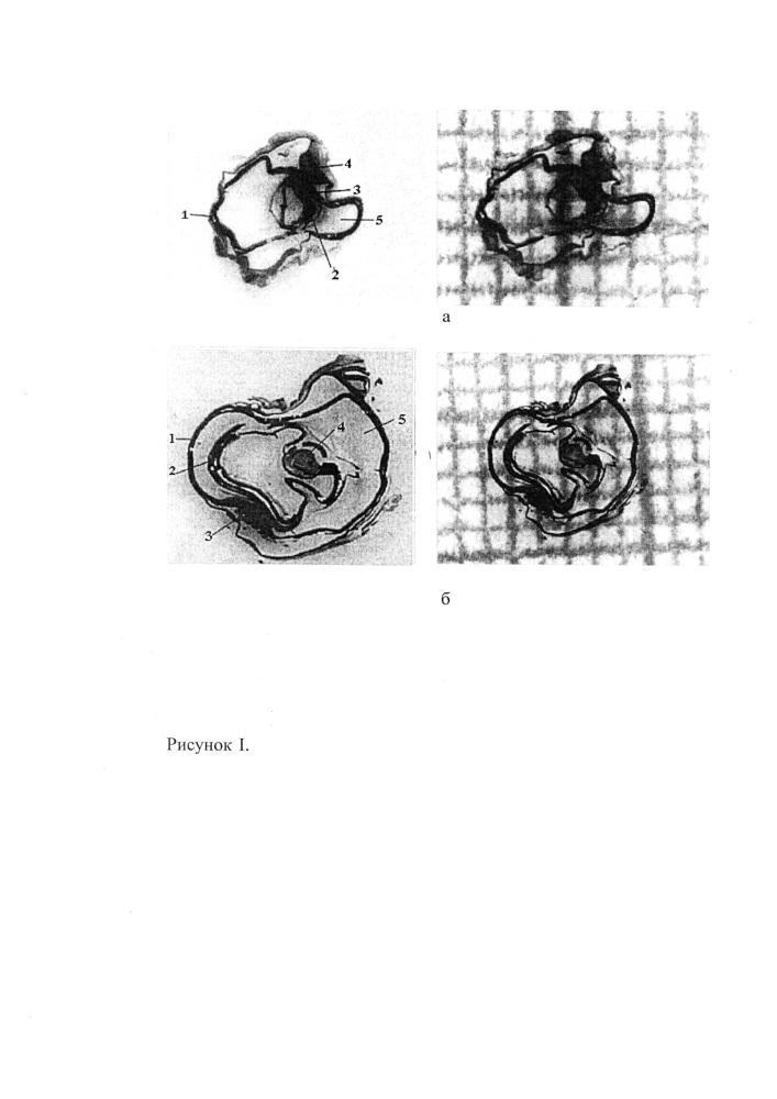 Способ исследования архитектоники структурных элементов органов у мелких животных