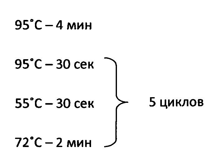 Способ получения сайт-направленных транслокаций в клетках saccharomyces cerevisiae