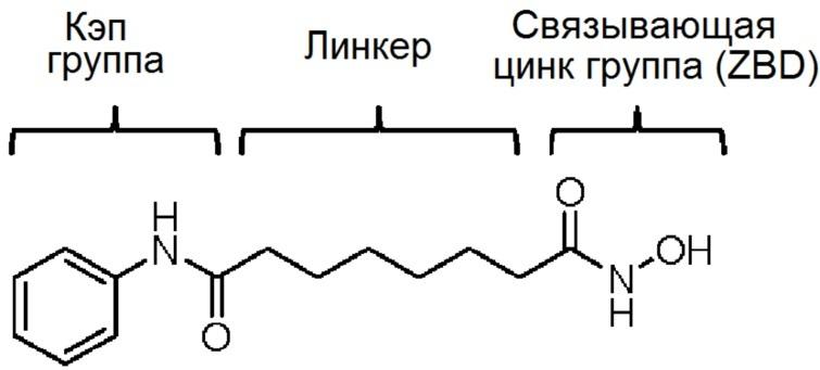 Производные оксадиазоламина в качестве ингибитора гистондеацетилазы 6 и содержащая их фармацевтическая композиция
