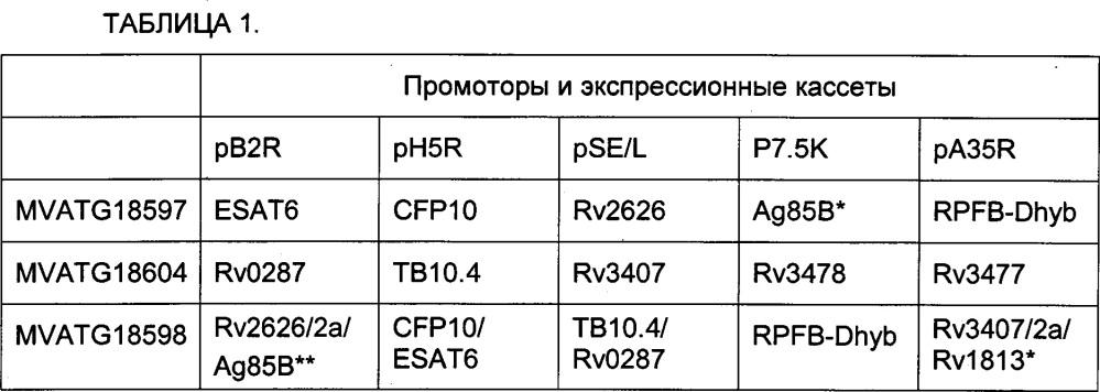 Гибридизация гетероолигомерных микобактериальных антигенов