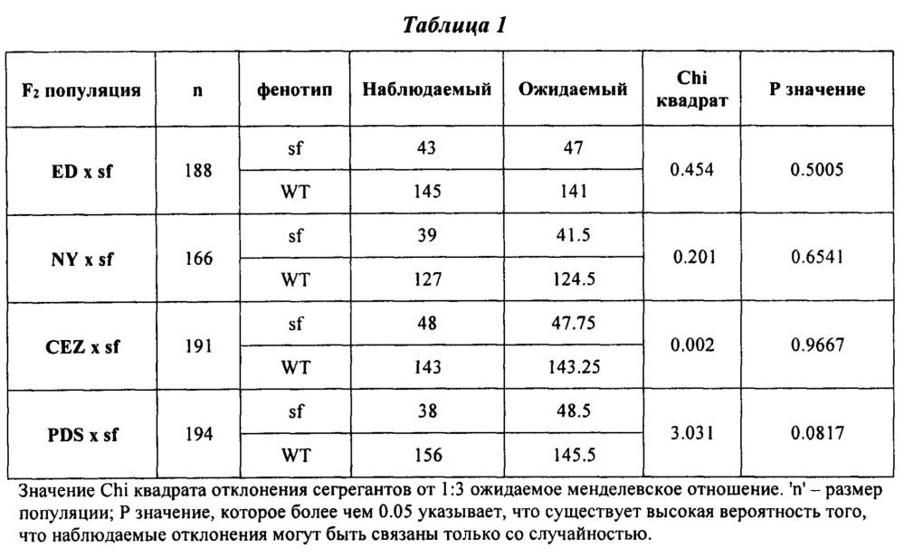 Растения дыни с повышенной урожайностью плодов