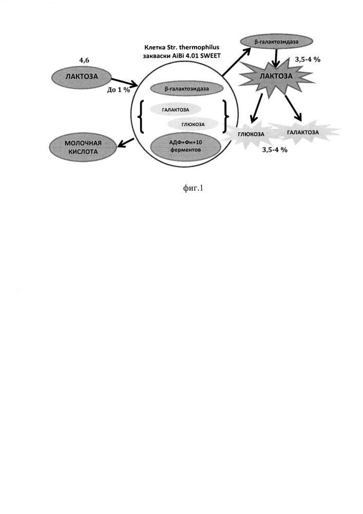 Способ производства безлактозного кисломолочного продукта