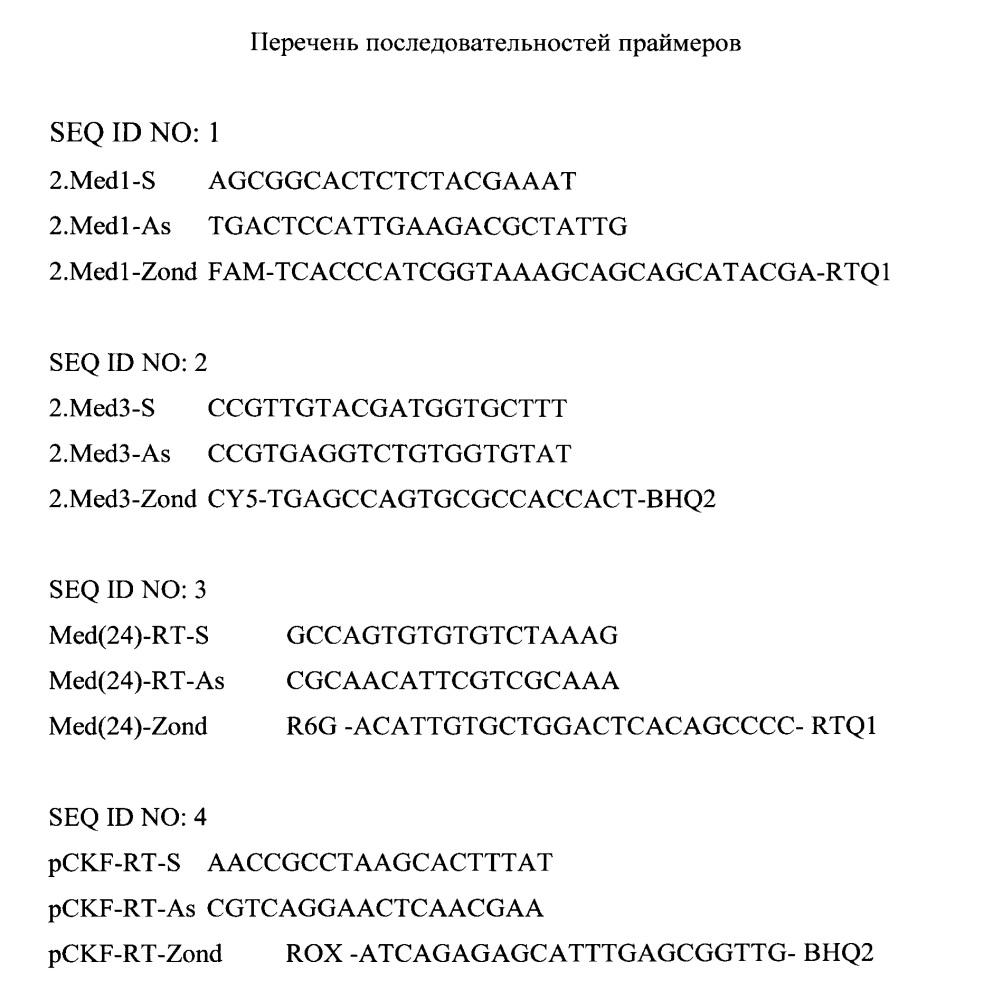 Способ идентификации штаммов yersinia pestis средневекового биовара с последующей дифференциацией по филогенетической принадлежности методом полимеразной цепной реакции с гибридизационно-флуоресцентным учетом результатов
