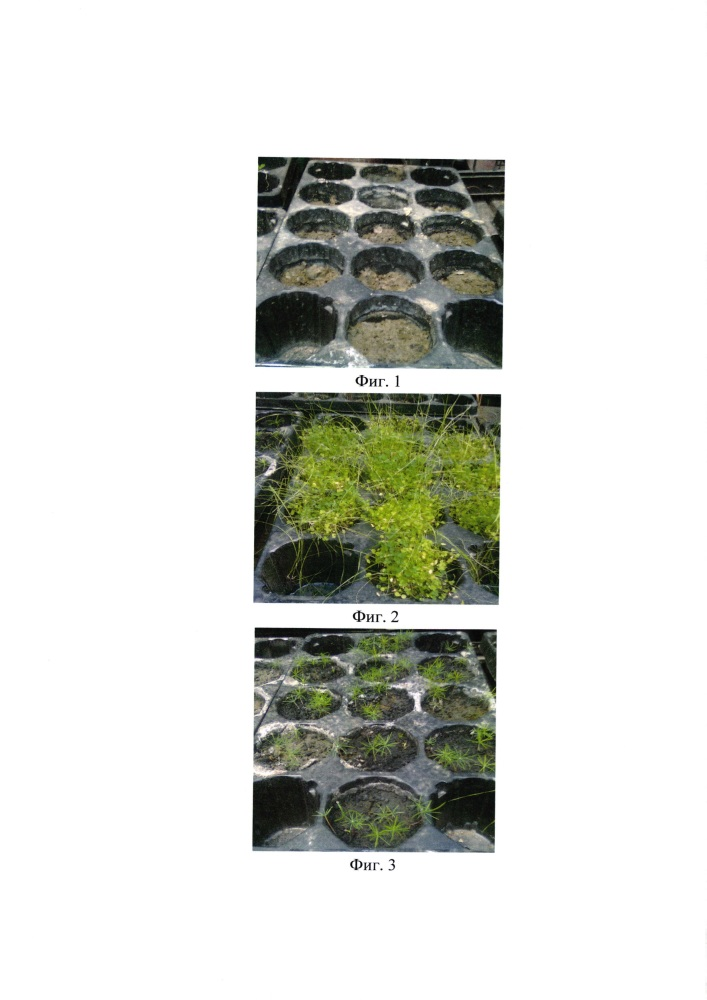 Состав для снижения пылевой нагрузки на экосферу и рекультивации поверхности хвостохранилища