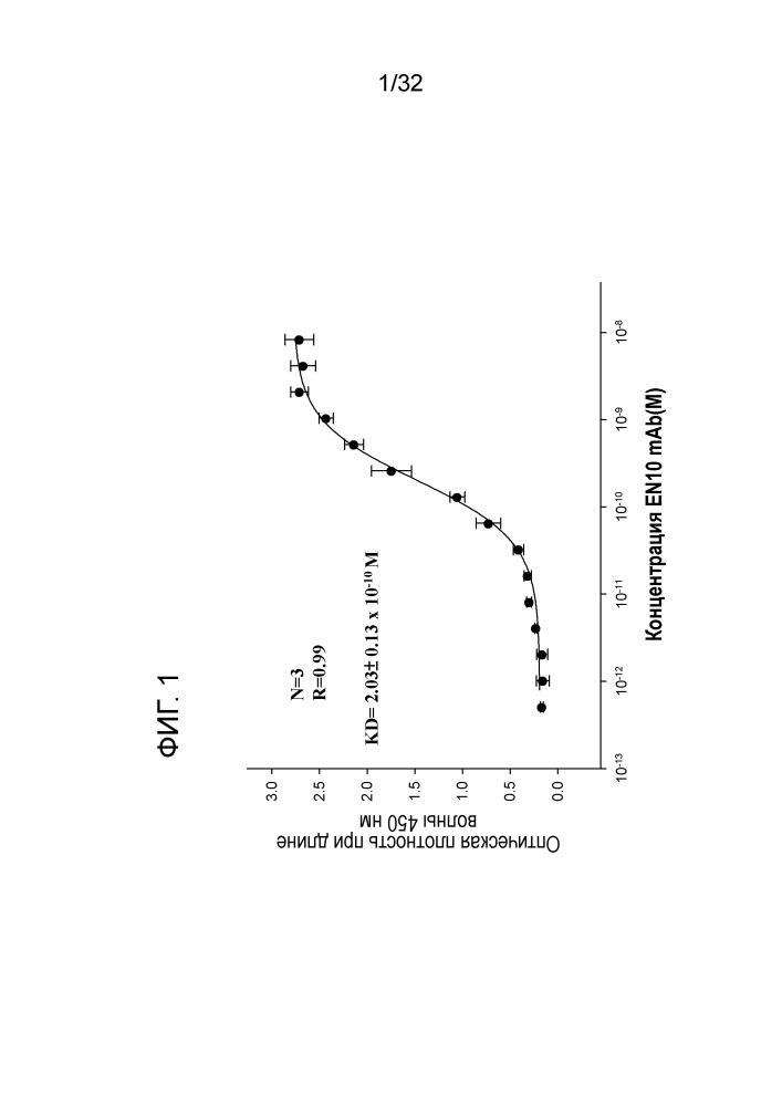 Специфические антитела к альфа-енолазе и способ применения при иммунных заболеваниях