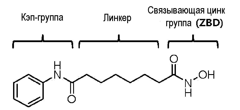 1,3,4-оксадиазольные производные соединения в качестве ингибитора гистондеацетилазы 6 и фармацевтическая композиция, содержащая их