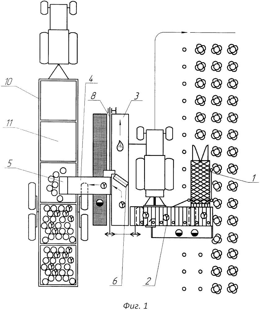 Способ уборки кочанной капусты и устройство для его осуществления