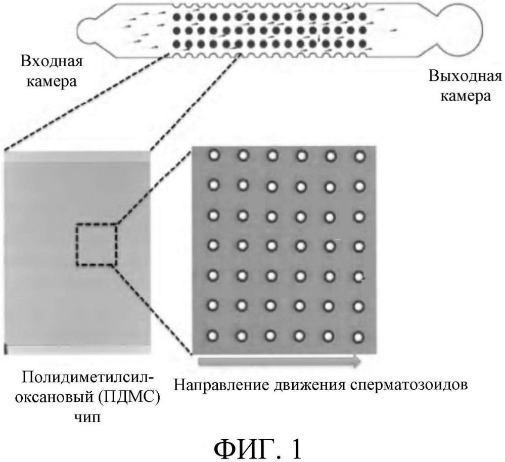 Микрофлюидное устройство для выборочного отбора высокоподвижных и морфологически нормальных сперматозоидов из необработанной семенной жидкости