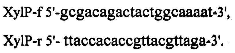 Трансформант дрожжей pichia pastoris, продуцирующий ксиланазу