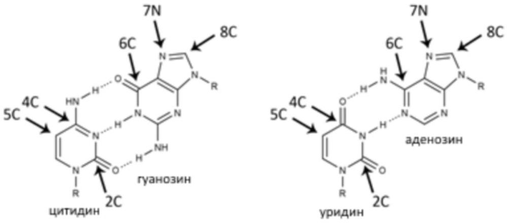 Способы и продукты для получения и доставки нуклеиновых кислот