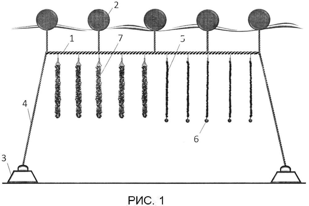 Способ культивирования пресноводных моллюсков дрейссен