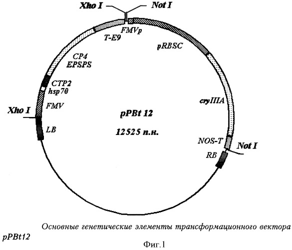 Recombinant polynucleotide sequence marking unique transformation recombinant polynucleotide sequence marking unique transformation action between genetic maker including gene cryiiia and genomic dna of lugovskoy potato ccuart Images