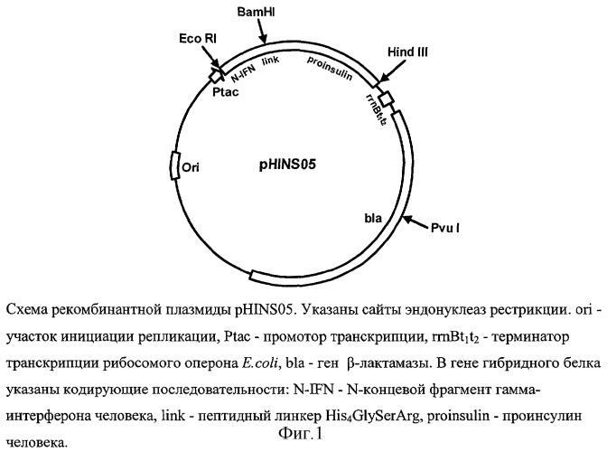 ДНК Рекомбинантная