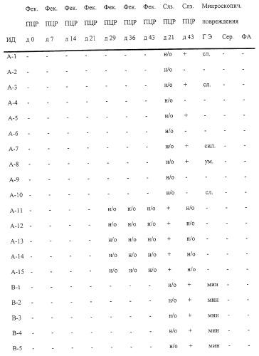 Способ культивирования бактерий lawsonia intracellularis, штаммы l.intracellularis, способ культивирования бактерий l.intracellularis (вариант), способ получения аттенуированного штамма l.intracellularis, способ определения наличия антител, вакцина, способ индукции иммунного ответа и аттенуированный штамм l.intracellularis n343np40wk
