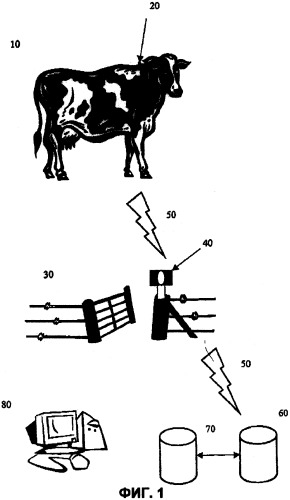 Способ и система для управления мясными продуктами