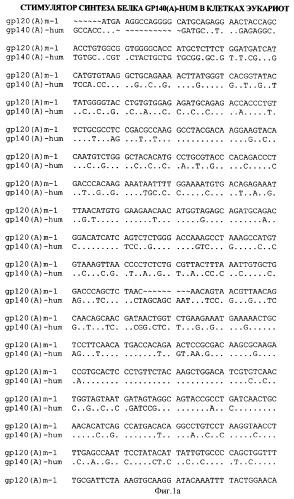 Экспрессионная плазмидная днк pbmc-gp140(a)-hum