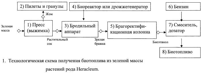 2458106 - Биоэтанол из борщевика как дикорастущего, так и культивируемого - иллюстрации